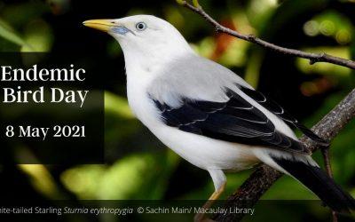 Endemic Bird Day 2021