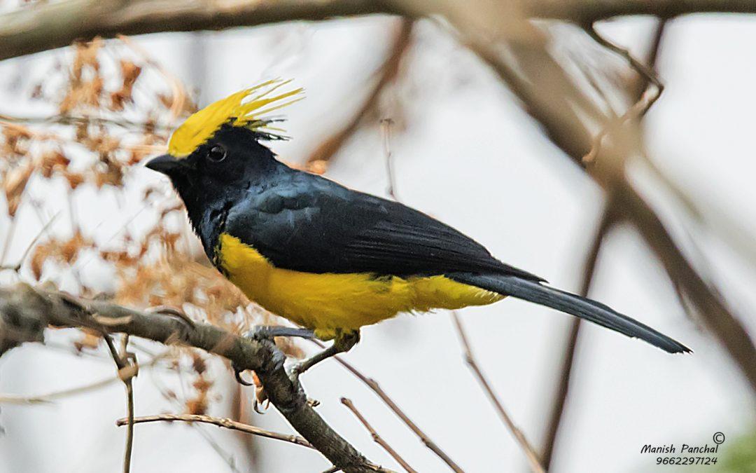 Birder Profile: Mayank Namdeo