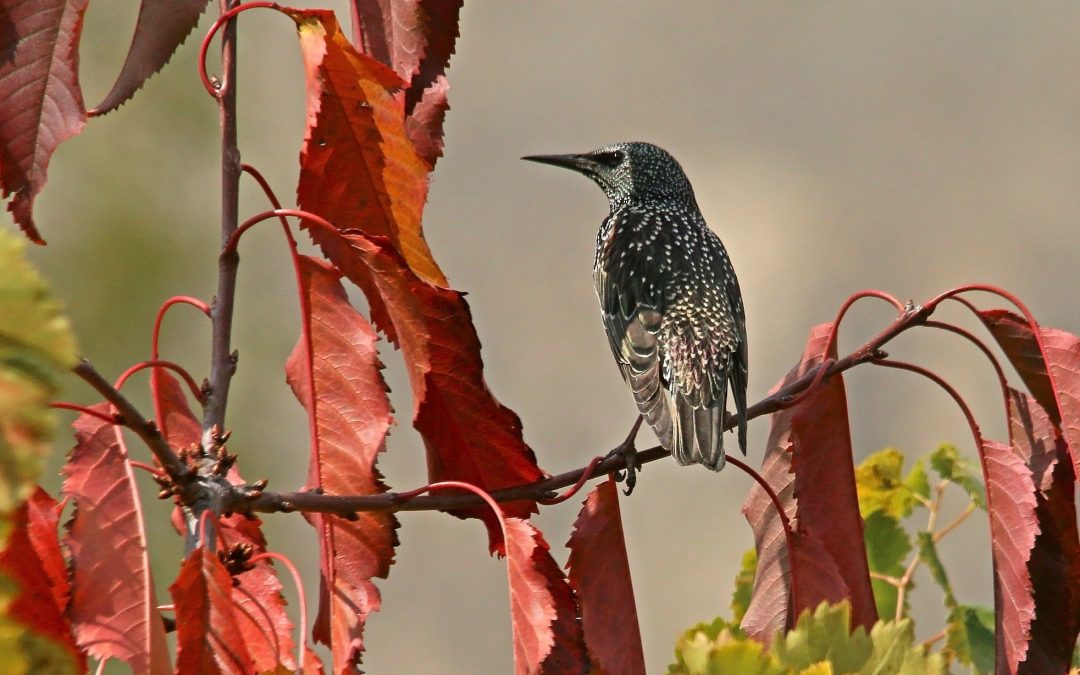Birder Profile: Saee Gundawar