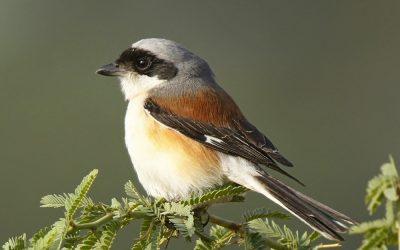 Lockdown Birding Diaries— Some Birds Live to Eat or Die Eating