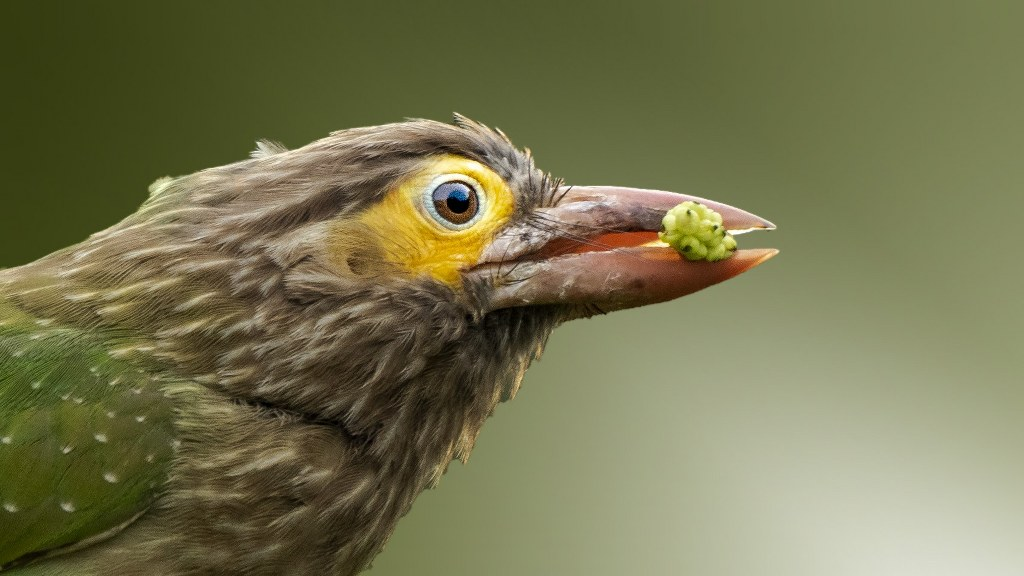 Frequency Matters: Acoustic Identification of Barbets