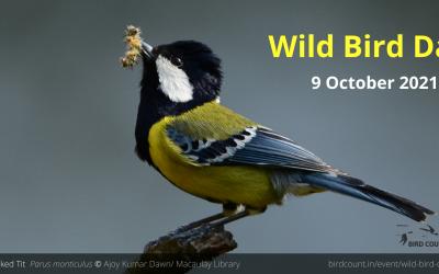 Wild Bird Day 2021