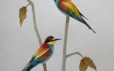 Birder Profile: Esha Munshi