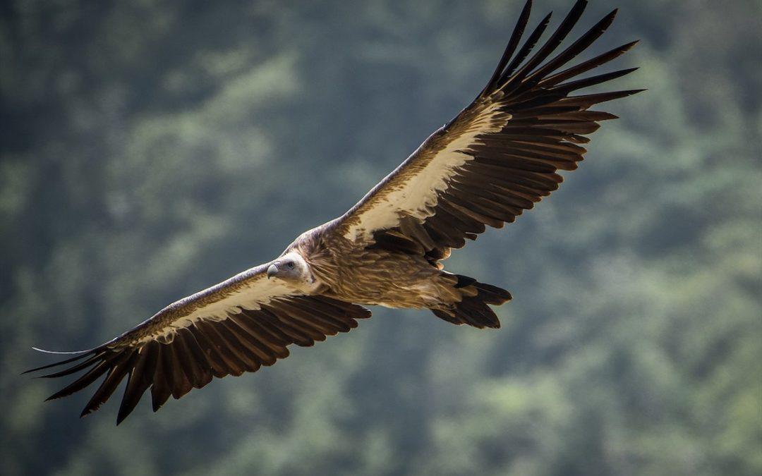 Birder Profile: Aakib Hussain